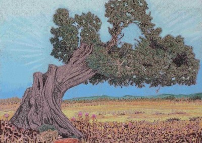 Pastell-Zeichnung  |  Steineiche auf Sardinien